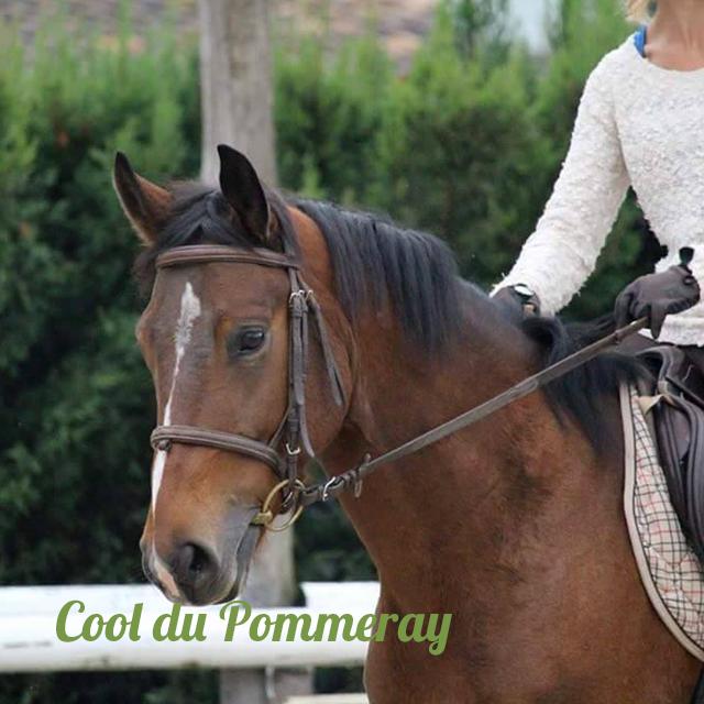 LA CAVALERIE cool du pommeray cheval