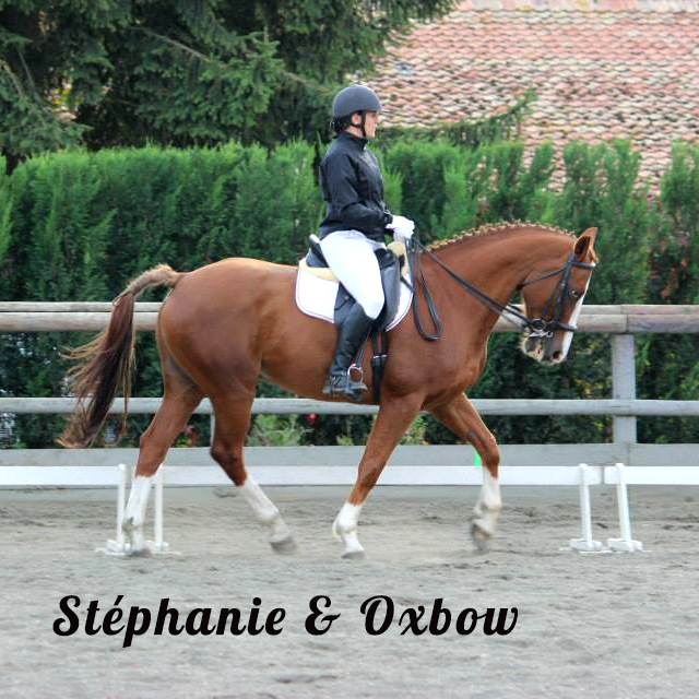 NOTRE OFFRE SPONSOR st  phanie oxbow dressage