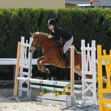 STAGES GALOP ET EXAMENS